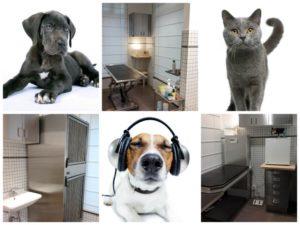 Vétérinaires de garde Bruxelles